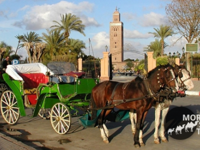 Marrakech and it 's rampart with horse and carriage